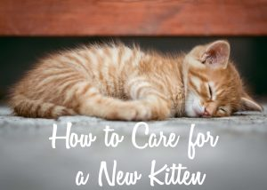 How to Care for a New Kitten