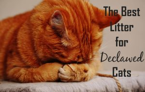 The Best Litter for Declawed Cats