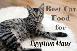 Best Cat Food for Egyptian Maus