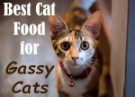 Best Cat Food for Gassy Cats