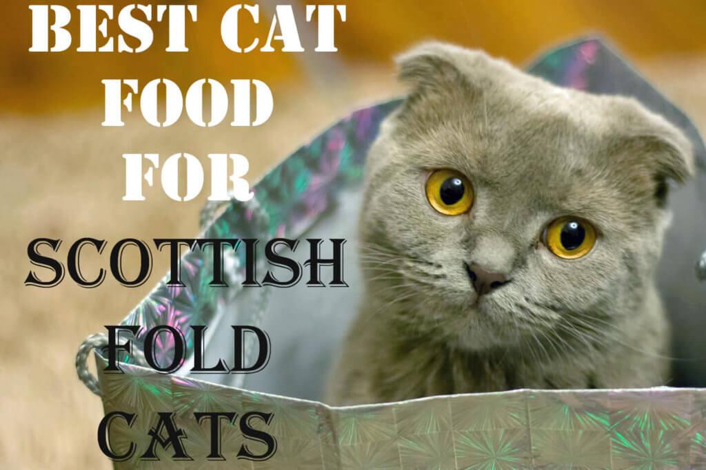 Best Cat Food for Scottish Fold Cats 2019 | Cat Mania