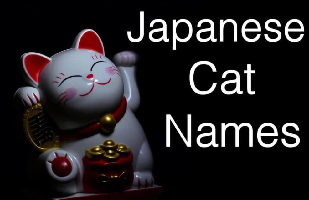 Japanese Cat Names : 100 + Adorable Names | Cat Mania
