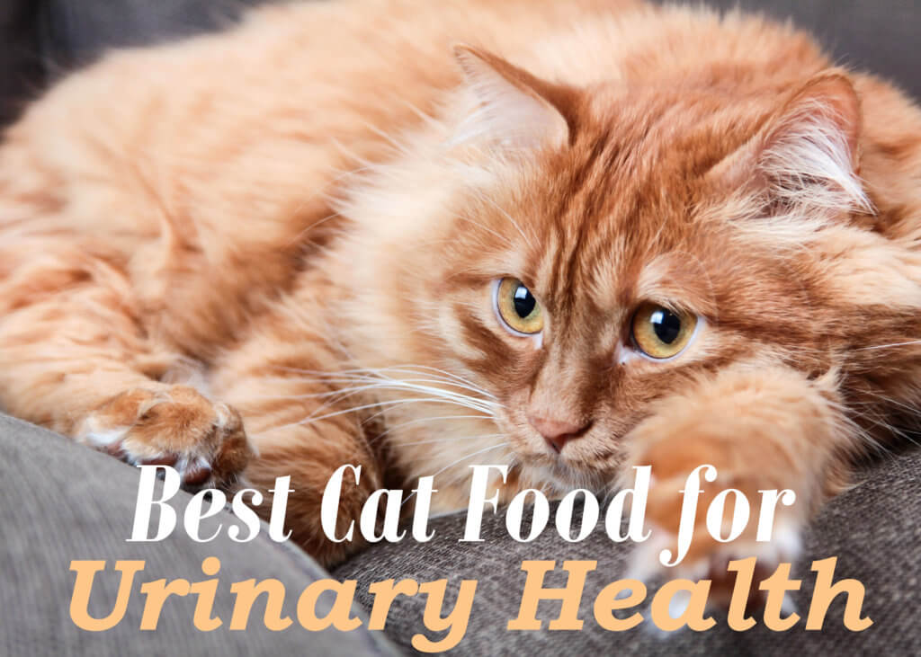 Best Cat Food for Urinary Health 2019 | Cat Mania