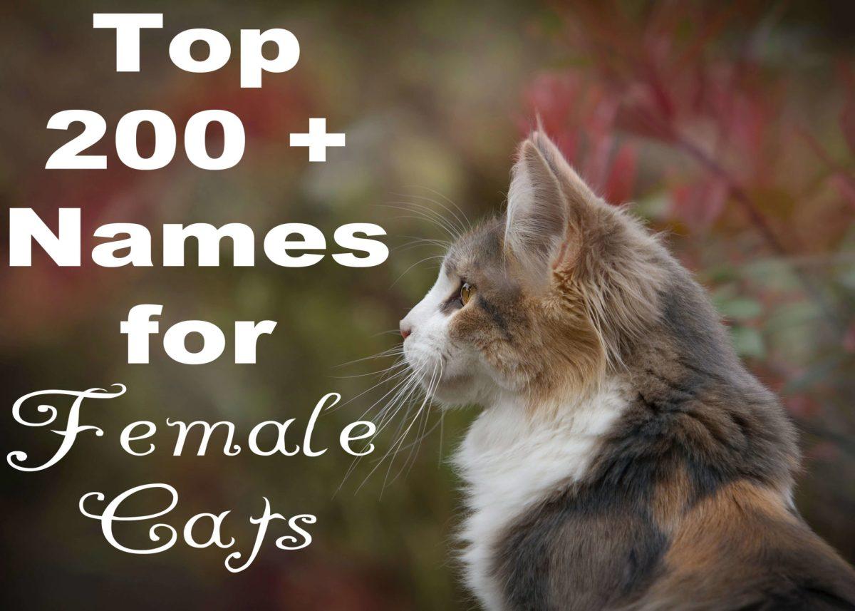 Ragdoll Cat Names 100 Perfect Names Cat Mania