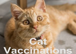 Cat Vaccinations : Protection, Schedule and Safety