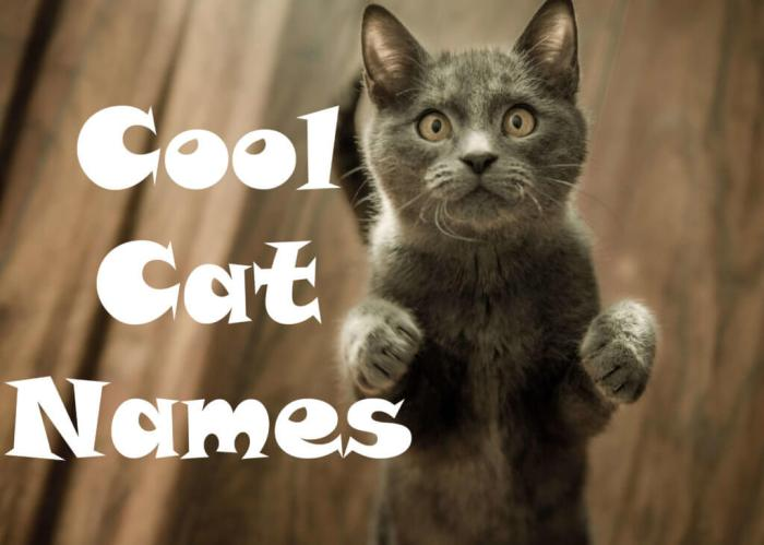 Cool Cat Names : 100 + Cool Names for your Cat