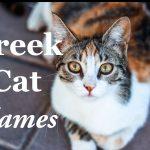 Greek Cat Names : 50 + Mythological Names