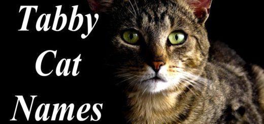 Tabby Cat Names : 100 +Perfect Names
