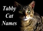 Tabby Cat Names : 100 +Perfect Names