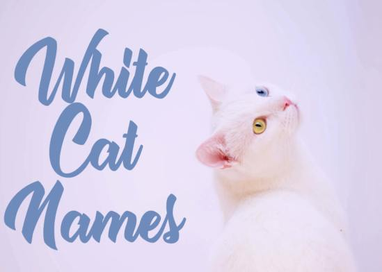 200 + White Cat Names