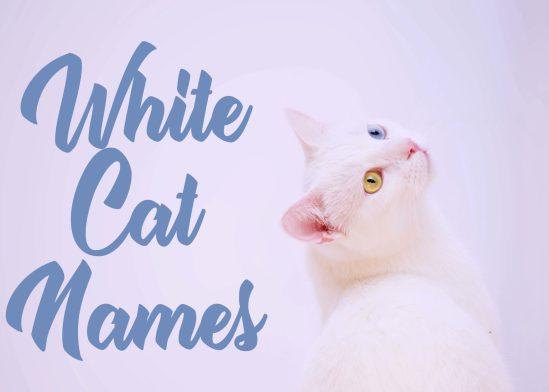 200 + White Cat Names