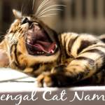 Bengal Cat Names - 100 + Exotic Names