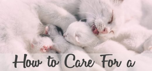 How to Care for a Newborn Kitten