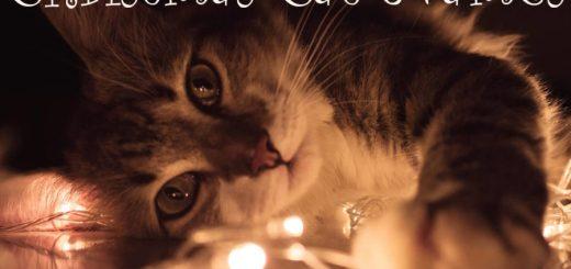 Christmas Cat Names - 60 + Merry Names