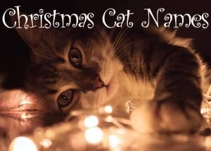 Christmas Cat Names – 60 + Merry Names