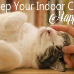Keep your indoor cat happy
