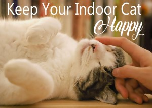 Keep Your Indoor Cat Happy