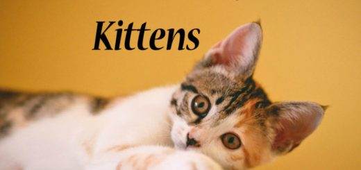 Best Litter Box for Kittens