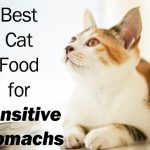 Best Cat Food for Sensitive Stomachs