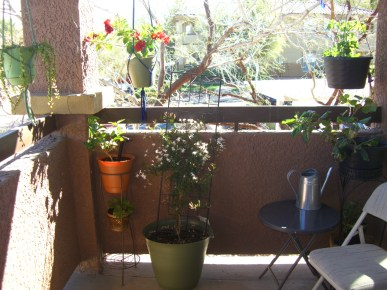 The patio is officially green and blooming!