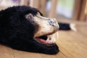 BearRug15