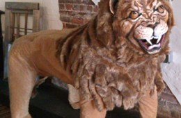 """FULL-SIZE LION made for the play """"Happy Birthday Wanda June"""" by Kurt Vonnegut performed by the Run-Of-The-Mill Players."""
