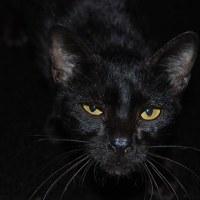 La superstition du chat noir et l'évangile des sorcières.