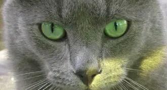 Cool Cat Badass Cat Names
