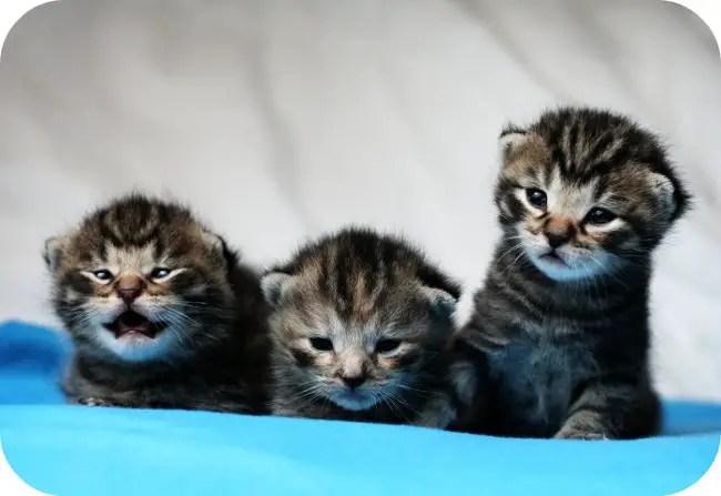 231 cute cat names