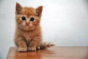 Cute Girl Cat Names