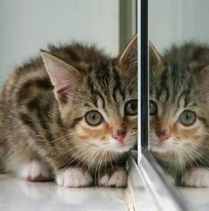 Cute Male Cat Names