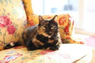 Tortoiseshell Cat Names_Tortie Kitten Names