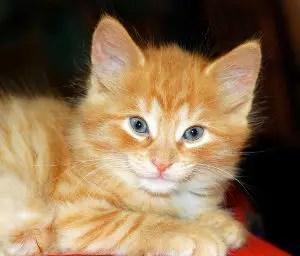 UniqueA Male Cat Names_Blue Eyes