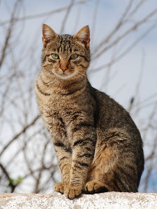 Unisex cat names_cat names city_tabby
