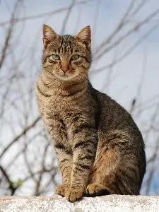Unisex cat names_cat names city_tabby