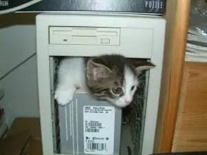 Nerdy-Cat-Names_Geeky-Cat-Names