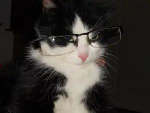 Nerd Cat Names