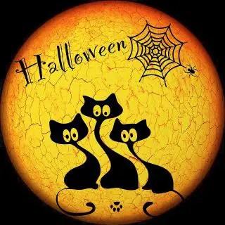 halloween cat names female