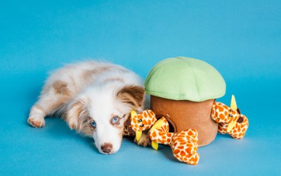ARE YOUR PETS BORED AND DESTRUCTIVE? WE HAVE THE SOLUTION!