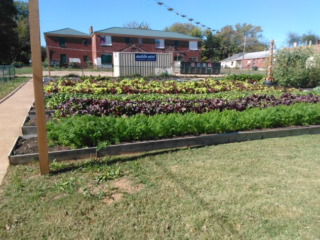 Civic-minded Improvements: Community Garden