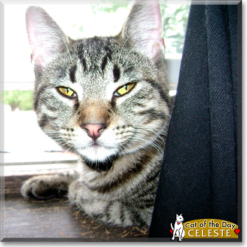 Celeste, the Cat of the Day