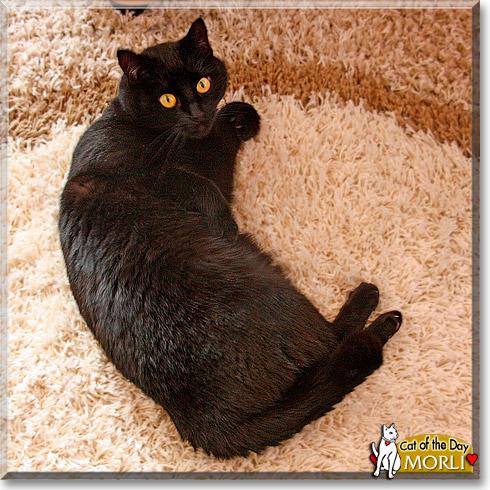 Morli, the Cat of the Day
