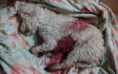 absurdo homem mata cachorro em catole do rocha com 10 facadas