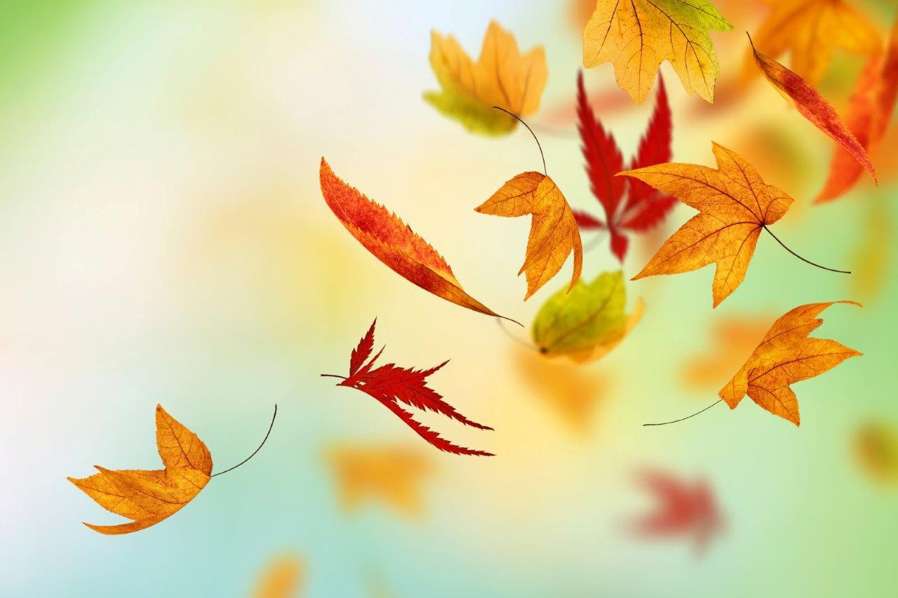 E quando a folha cai tocando no cho de modo leve e