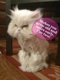 grumpy cat speaks out about a pink collar