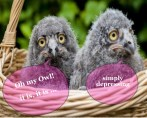 two cute owls speak out about a pink collar