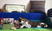 cat-kitty-katze-parcel-birthday-gift-janis_2
