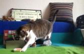 cat-kitty-katze-parcel-birthday-gift-janis_3