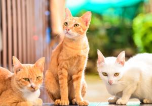 cat vision color