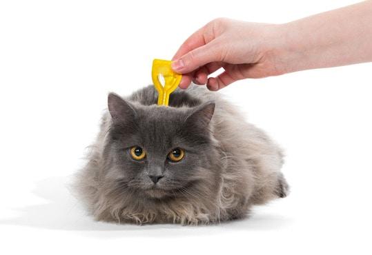 cat getting a flea treatment
